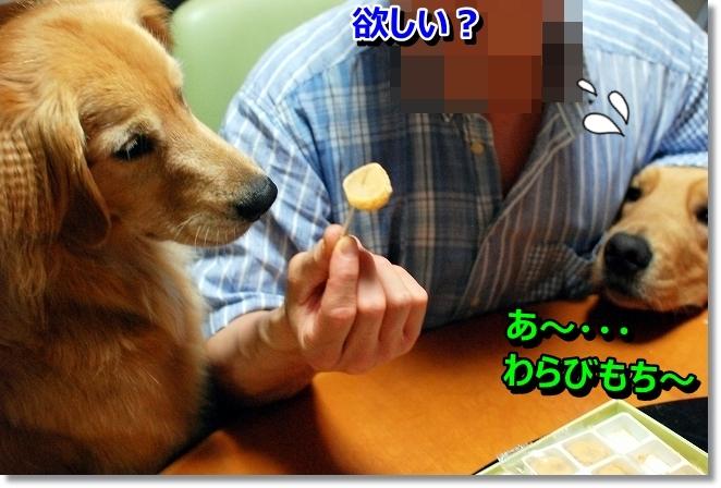 DSC_0034_20130808200243abc.jpg