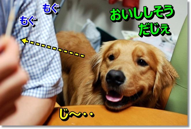 DSC_0045_201308082003197f0.jpg