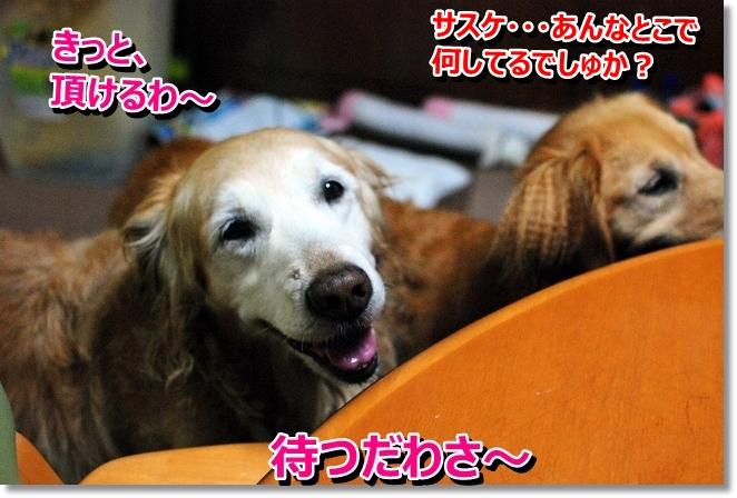 DSC_0047_20130808200321b45.jpg