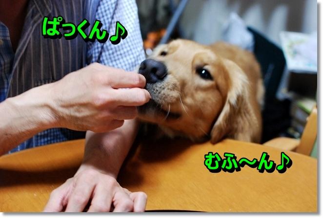 DSC_0050_20130808200323d69.jpg