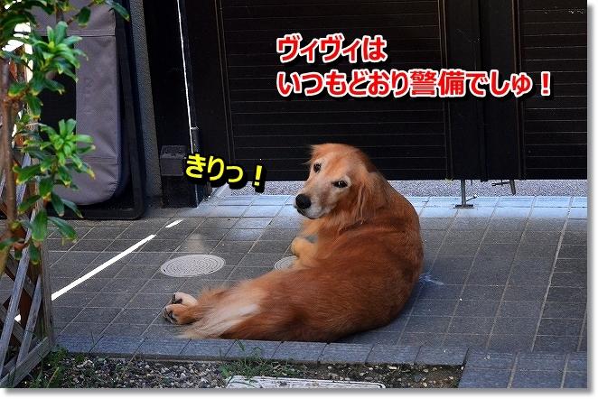 DSC_0414_2013091709510125b.jpg