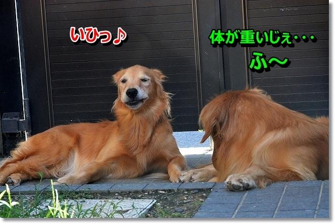DSC_0432_201309170951519bc.jpg