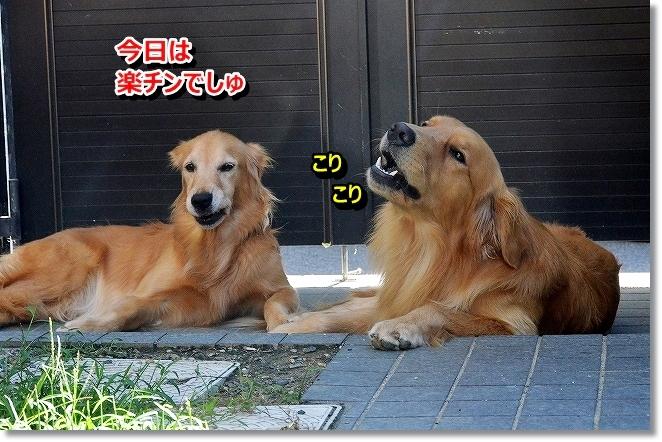 DSC_0436_201309170951585a6.jpg