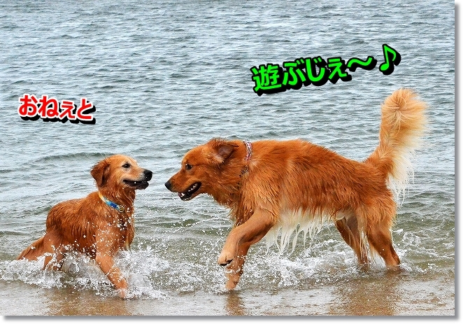 DSC_0597_201309190040316d7.jpg