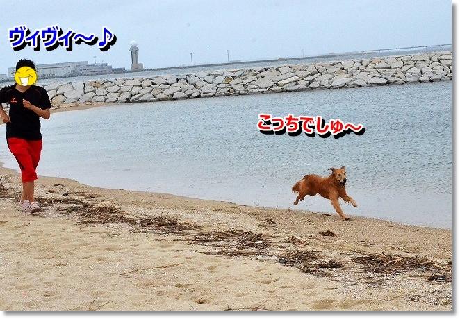 DSC_0609_201309190040346eb.jpg