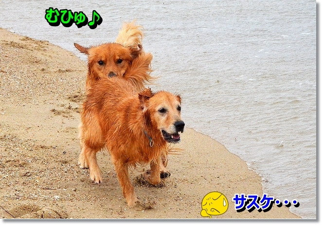 DSC_0637_201309190041490d7.jpg