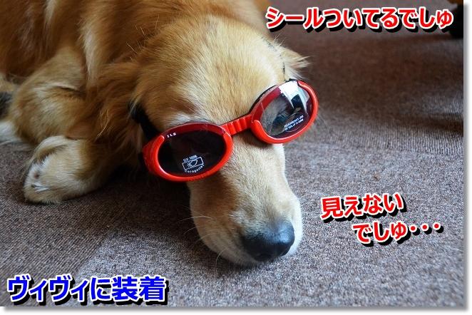 DSC_6004_20130803205746521.jpg