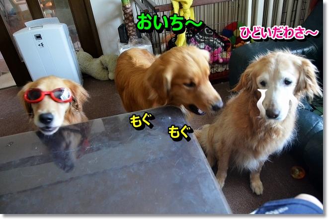DSC_6020_20130803232704aaa.jpg