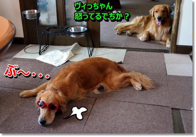 DSC_6042_20130803205941461.jpg