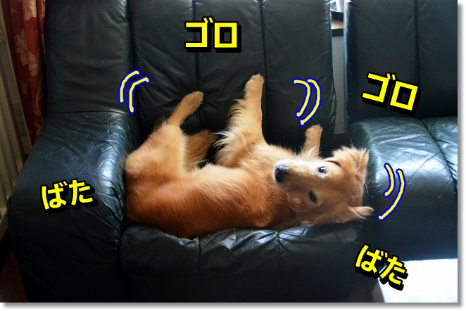 DSC_6064.jpg