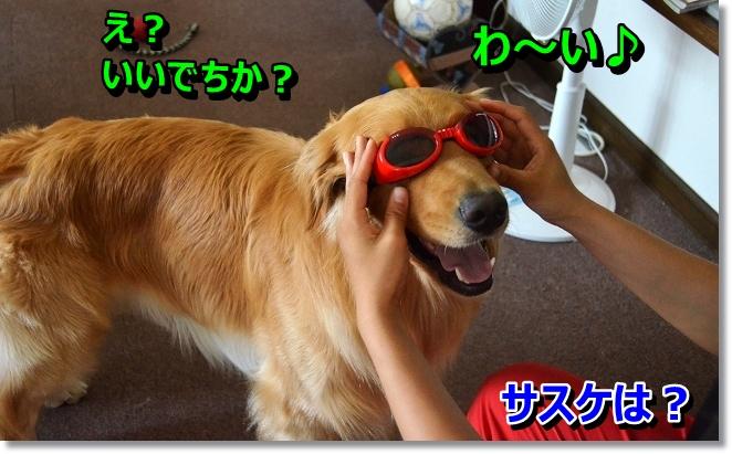 DSC_6078_20130803210046715.jpg