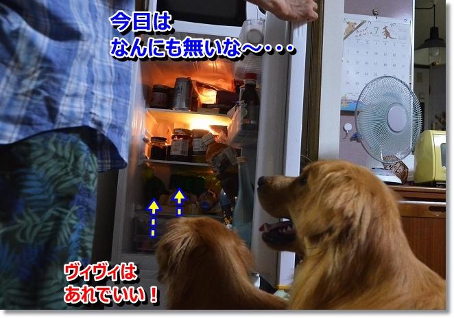 DSC_6664_20130802115804525.jpg