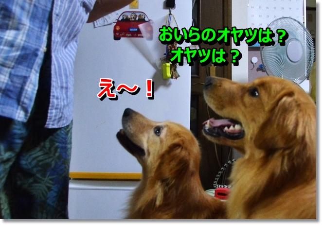 DSC_6666_2013080211580676c.jpg
