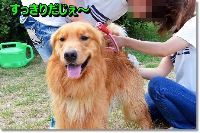 DSC_6798_20130806183958647.jpg