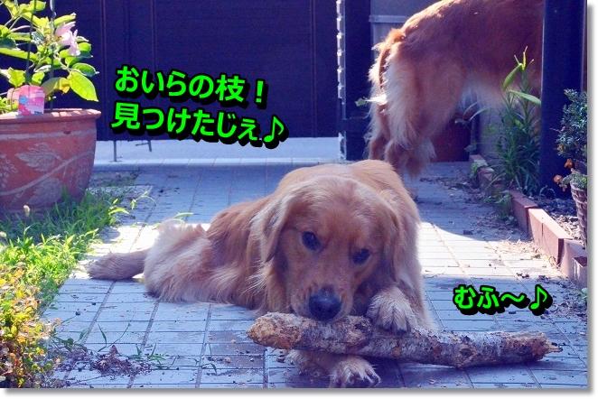 DSC_6884.jpg