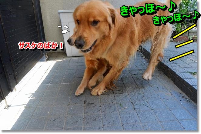 DSC_6897_20130807105949e11.jpg