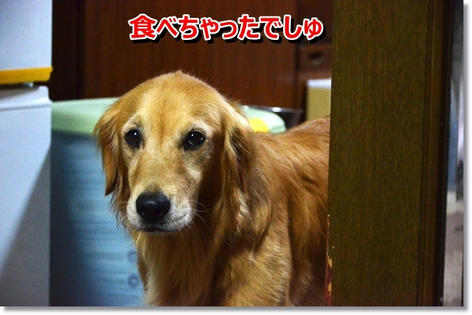 DSC_7020_20130810191216c6a.jpg