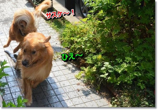 DSC_7178_20130813195820cd6.jpg