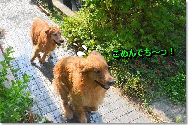 DSC_7180_20130813195854935.jpg