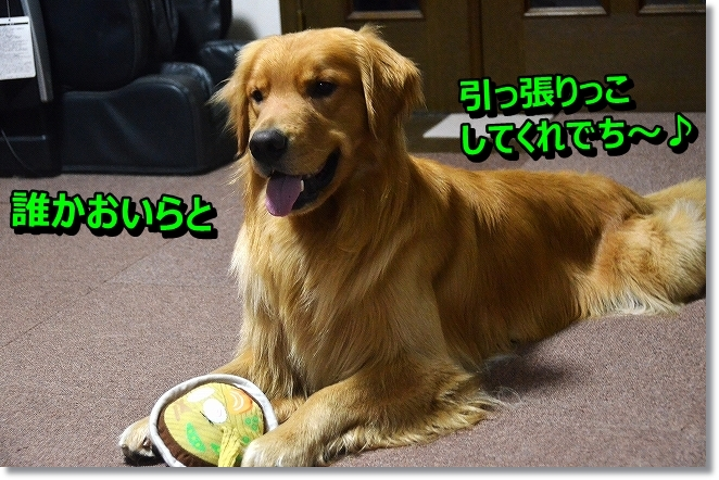 DSC_7235_2013091217533341d.jpg