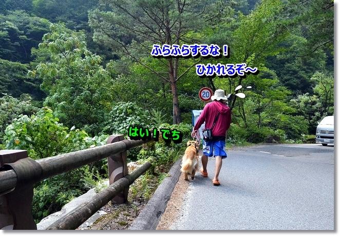 DSC_7272.jpg
