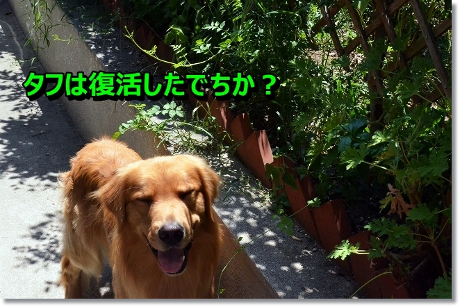 DSC_7332.jpg