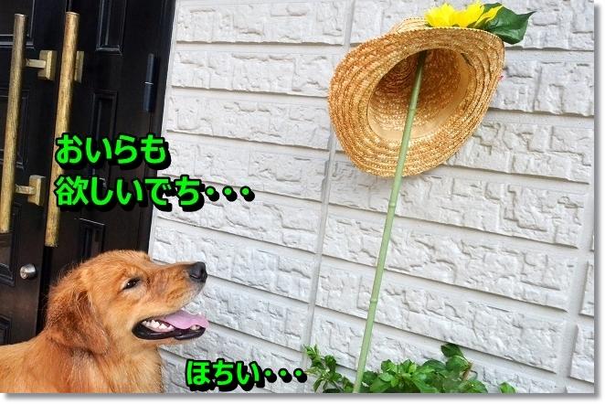 DSC_7408_20130818002125a4d.jpg
