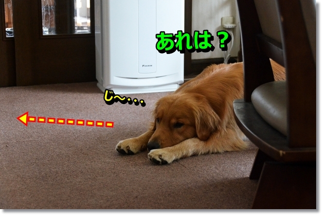 DSC_7411_201308171950544a9.jpg