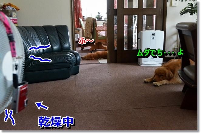 DSC_7412.jpg