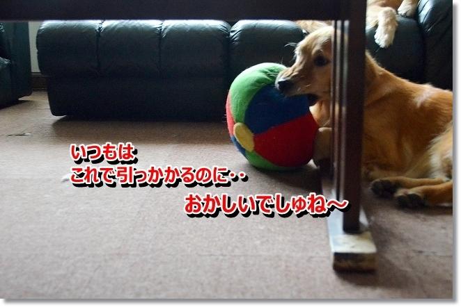 DSC_7423.jpg
