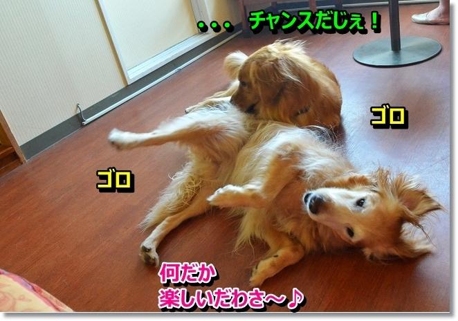 DSC_7650_201308241103342ca.jpg