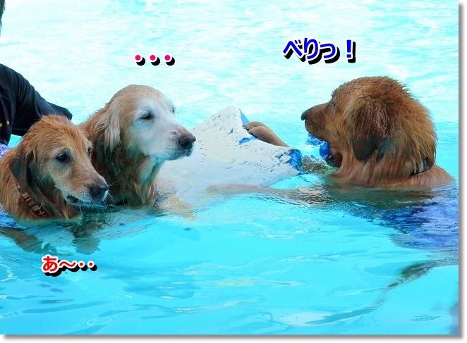 DSC_8003_20130828163814ee3.jpg