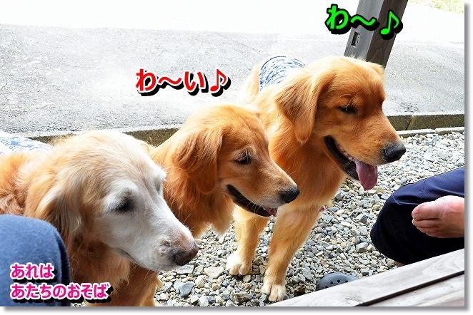 DSC_8538.jpg