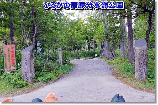 DSC_8582_20130906101326cf4.jpg