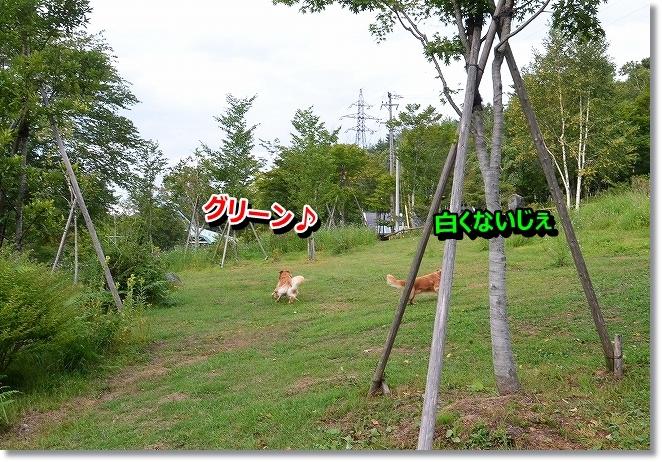 DSC_8630.jpg