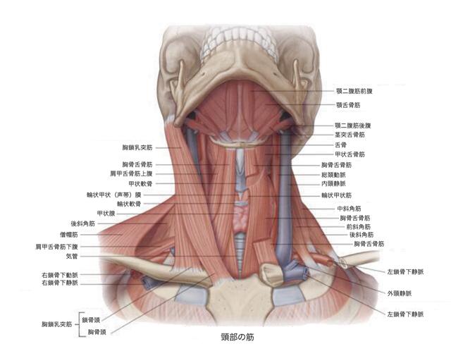 痛い 鎖骨 リンパ