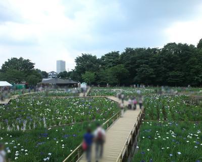 菖蒲まつり201201
