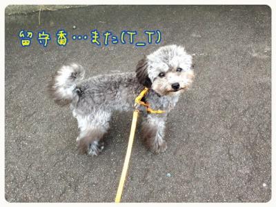 蜀咏悄091303_convert_20130913230619