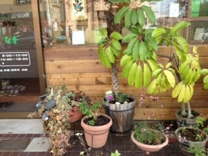 s-なぎ治療院植物