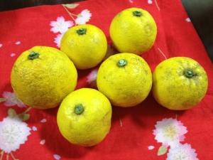 河の手ギャラリーの柚子1
