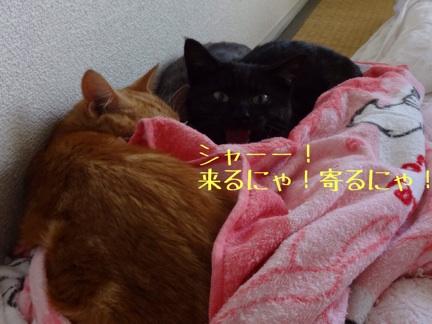 2013101523445779f.jpg