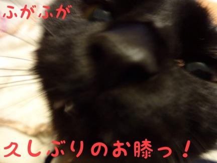 20131021223452711.jpg