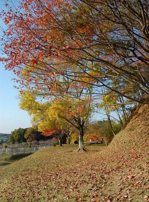 13.11.24高松塚
