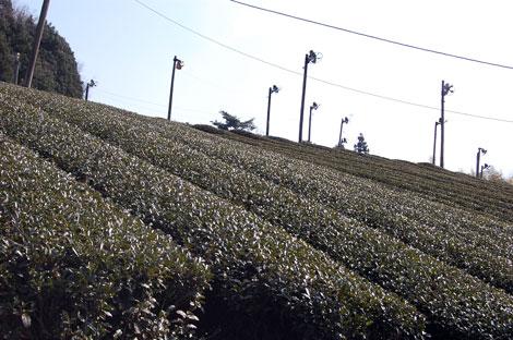 14.1.11茶畑下から