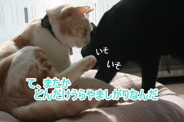 IMG_2657.jpg