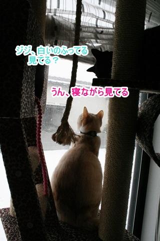 IMG_3070.jpg