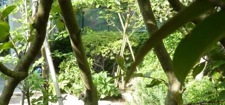 山茶花の生け垣の葉が消えた!