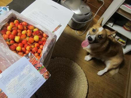 2012年7月12日Keiko伯母さんから届いたサクランボ