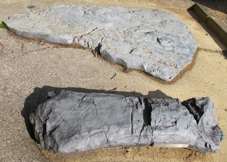 トバリュウ化石レプリカ