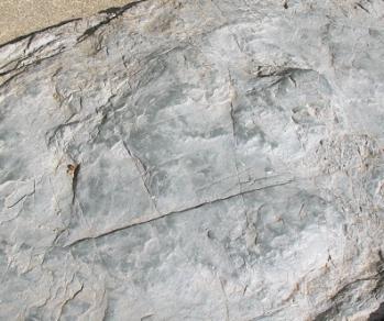 トバリュウ足跡化石レプリカ